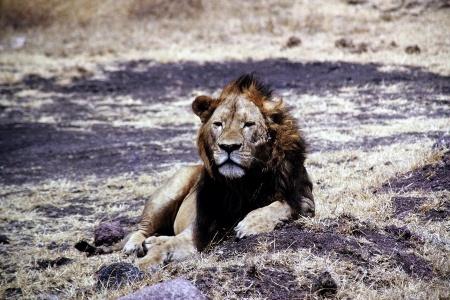 Fauler Lüwe