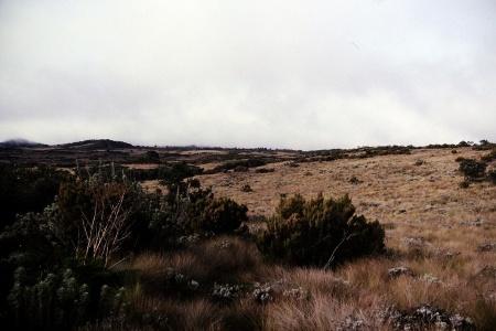 Steppenlandschaft zwischen Mandara und Horombo