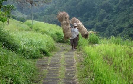 Wanderweg durch Reisfelder bei Ubud