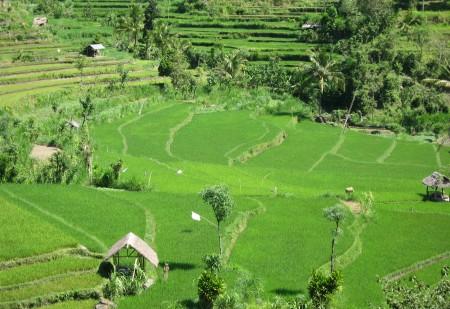 Reisterrassen im Osten von Bali